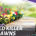 Best Weed Killer for Lawns [2020 Reviews & Guide] – Weed Killer Advise