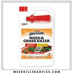 Best herbicide killer - Spectracide
