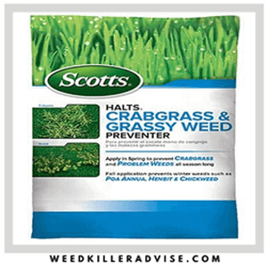 Scotts Grass and Weed killer 300x300