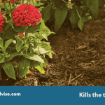 Strongest Weed Killer that kills Everything 2021-Toughest herbicide Review