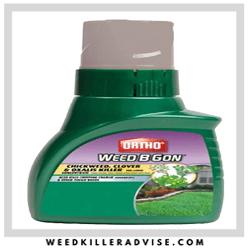 Ortho-Weed-B-Gon - Best Dandelion weed killer