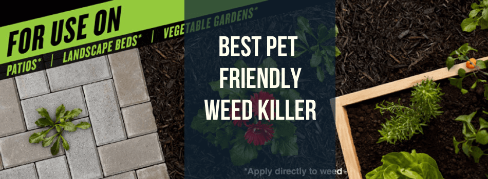 Pet Friendly weed killer Feature Image