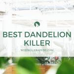 Best Dandelion Killer Reviews 2021 – Top Reviews & Buyer's Guide