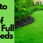 How to Get Rid of a Lawn Full of Weeds - Best Weed Killer Advise