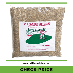 Canada-Green-Grass-Seed