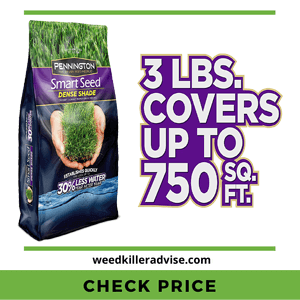 Pennington Smart Seed Dense Shade Best Grass Seed for shade