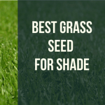 Best Grass Seed for Shade Rated for 2021 – Top 5 Latest Picks
