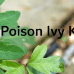 Best Poison Ivy Killer – Top Rated Poison Ivy Killers Rated for 2021