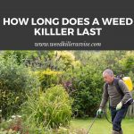 How Long Does Weed Killer Last- A Complete Guide by Weed Killer Advise