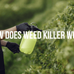 How Does Weed Killer Works- A Complete Guide by Weed Killer Advise