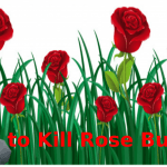 How to Kill Rose Bushes to Make Your Garden and Yard Looks Beautiful 2021
