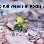 How to Kill Weeds in Rocks 2021- Make Your Rock Bed Beautiful