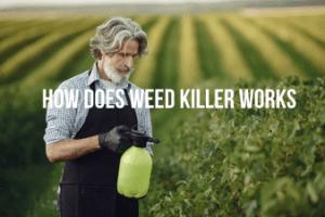 Working of Weed Killer
