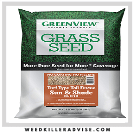 GreenView Turf Type Tall Fescue – Best turf for dogs
