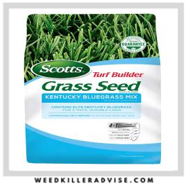 2: Kentucky Bluegrass – Best pet safe grass seed