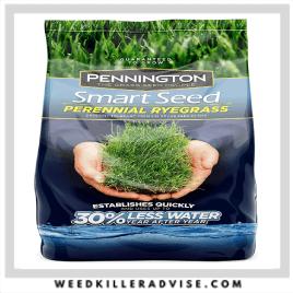 3: Pennington Smart Seed Perennial RyeGrass – Best grass for dog urine spot