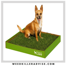 5: DoggieLawn Real Grass Dog Potty (Disposable)