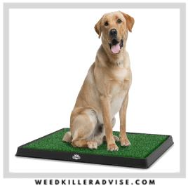 7 PETMAKER Artificial Grass – Best pet safe grass seed