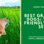 Best Grass For Dogs 2021 - Top Pet Friendly Grass Seed Reviews